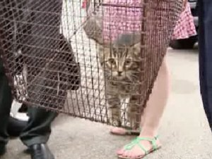 Couple Finds a Cat Under Their Hood During Morning Commute