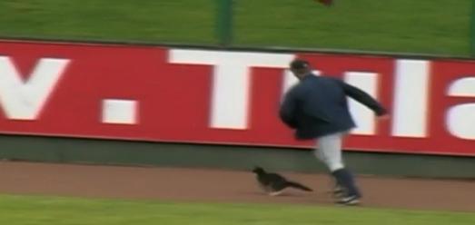 A Cat Interrupts a Minor League Baseball Game