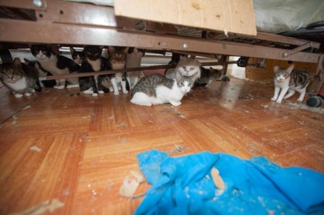 The ASPCA Removes 75 Cats from a Bronx Apartment