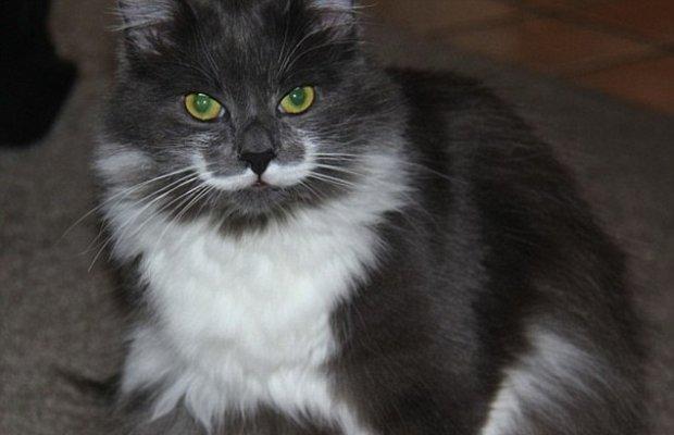 Hamilton the Hipster Cat Becomes Latest Internet Sensation