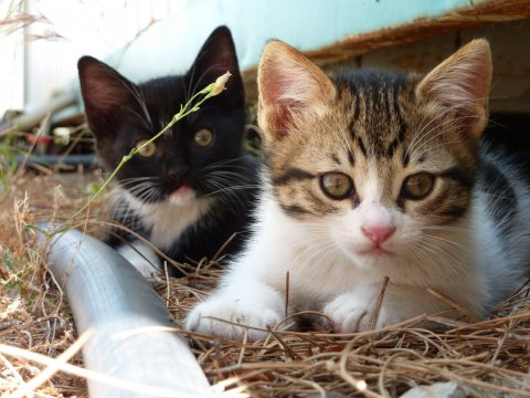 We Need to Put a Stop to Switzerland's Illegal Cat Fur Trade