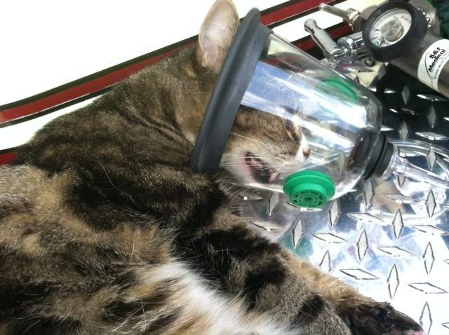 Cat is Revived with Oxygen Mask After Being Saved from a Fire