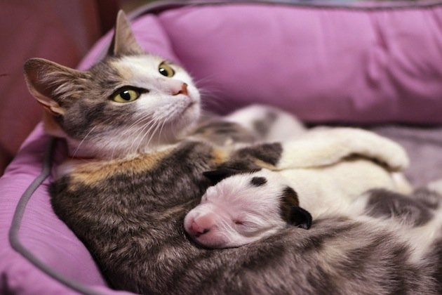 A Cat Nurses a Week-Old Abandoned Puppy