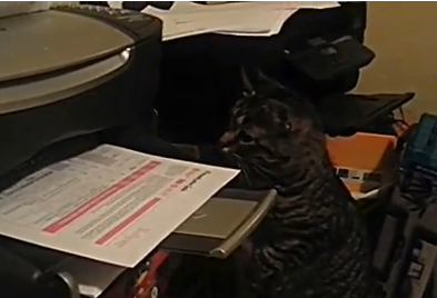 Cat Video of the Day:  Cat Becomes a Great Office Helper