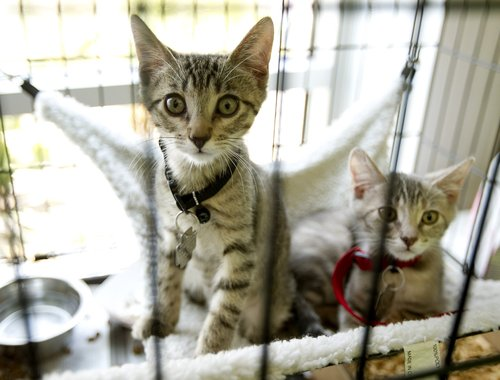 Kittypalooza is a Success in Miami and Norfolk