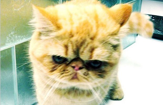 Justin Bieber's Cat Tuts Gets Her Own Twitter Account