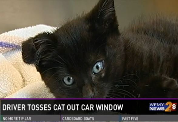 Man Saves and Adopts a Cat Thrown From a Moving Car