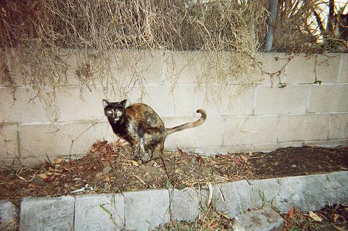 Cat Feces May Become a Public Health Problem