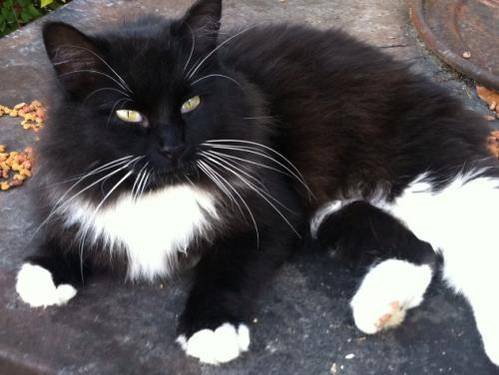 Cat Rescued out of a Hot Truck in Michigan