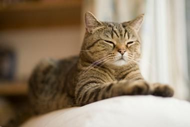 Experts Say Making Your Cat Indoor Only is the Way to Go