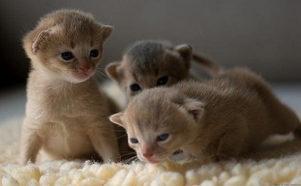 A Cute Gallery of Cat Trios