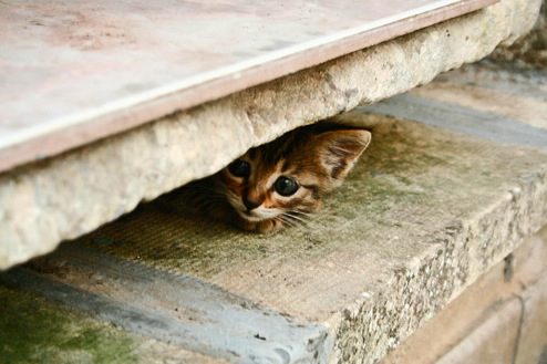 Six Tips on Finding Your Lost Cat