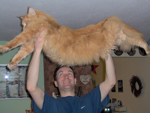 A Gallery of Humongous House Cats