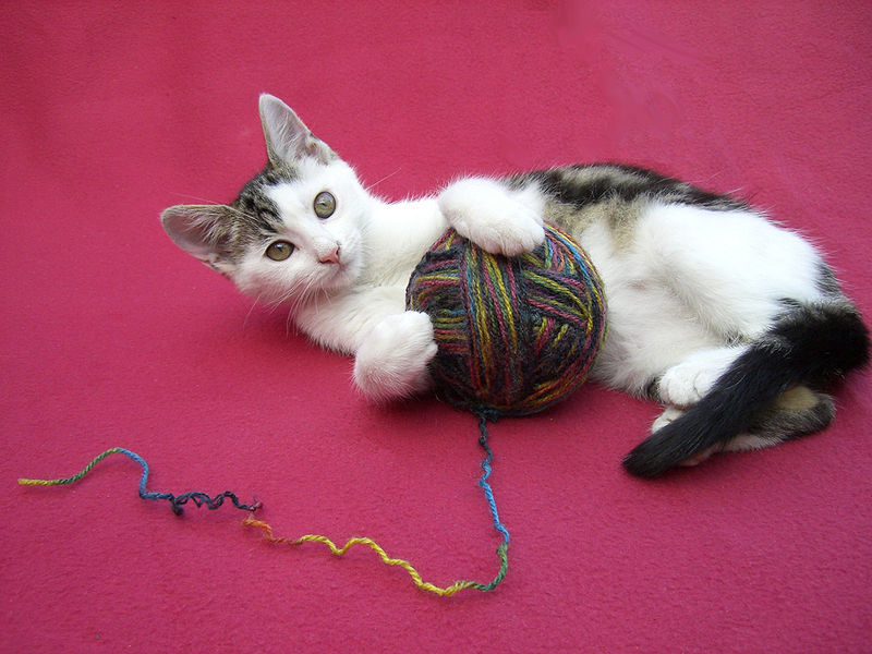 Five Great Ways to Keep Your Cat Entertained