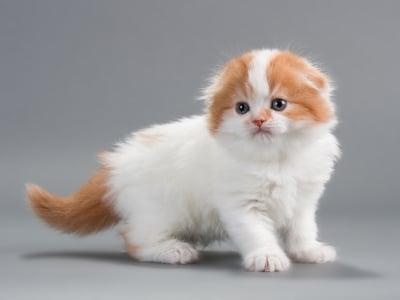 The 10 Smartest Cat Breeds
