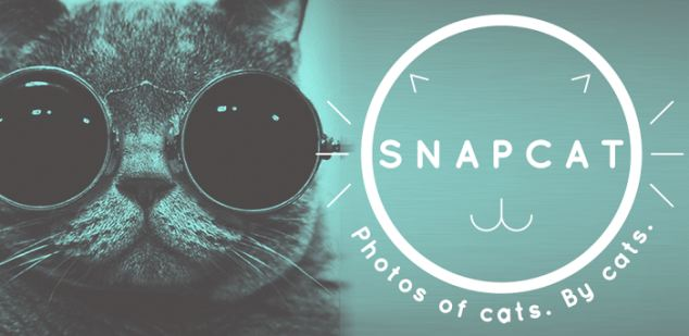 New Smartphone Apps Allow Cats to Take Pictures of Themselves