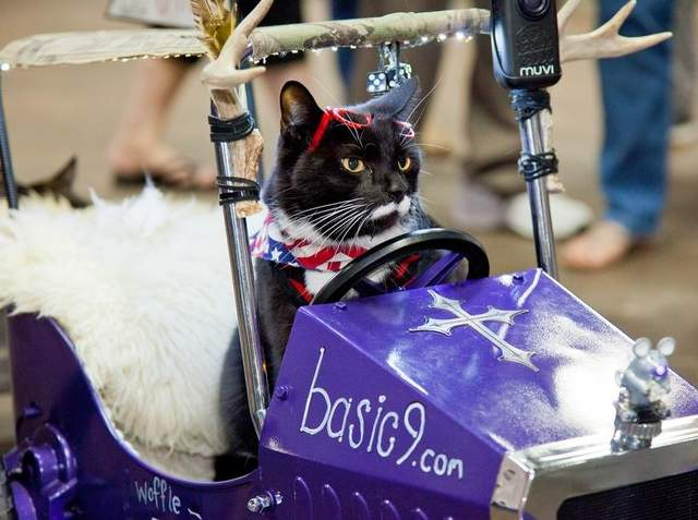 Be sure to Check out the 77th Annual Cat Expo This Weekend
