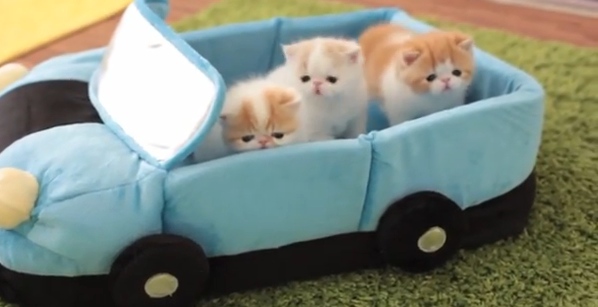 Cat Video of the Day: Kitties first Car Ride
