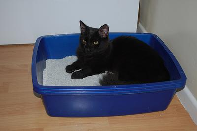 Quick Cat Tip of the Day:  Make the Litter Box Easier to Use
