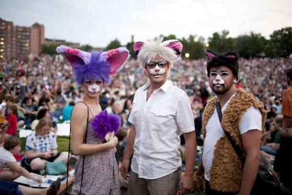 More Internet Cat Video Festivals Sprouting Up Around the Country