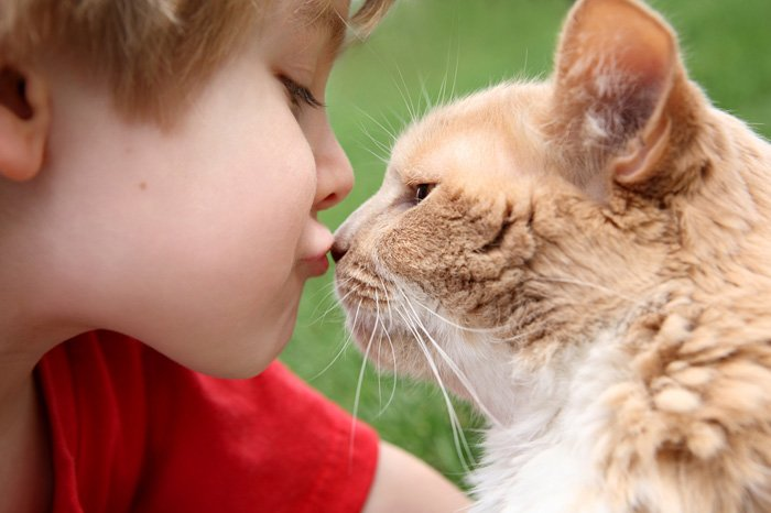 Cat Tip of the Day:  The Routine of a Cat Can Benefit a Child with Anxiety