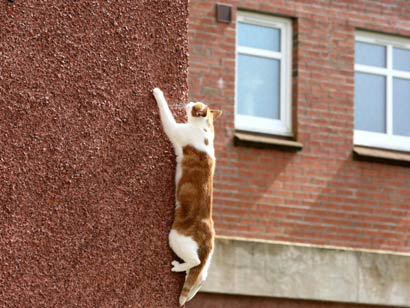 Quick Cat Tip of the Day:  A Climbing Cat is a Happy Cat so Keep it that Way