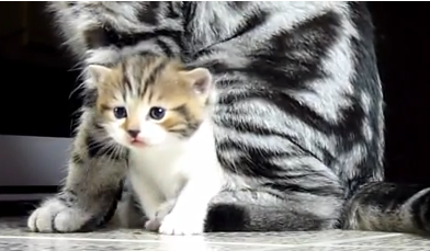 Cat Video of the Day:  Cute and Funny Kitten Compilation