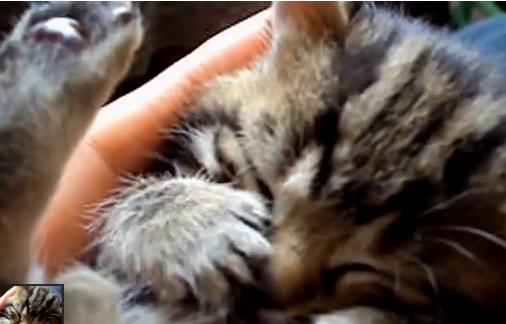 Cat Video of the Day:  One of the Cutest Dreaming Kittens