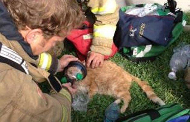 Salt Lake City Firefighters Revive a Cat after a Kitchen Fire