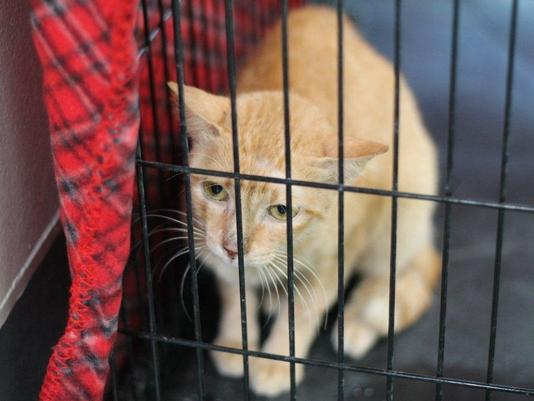 Cat Survives a Freight Container Trip from Philippines to Los Angeles