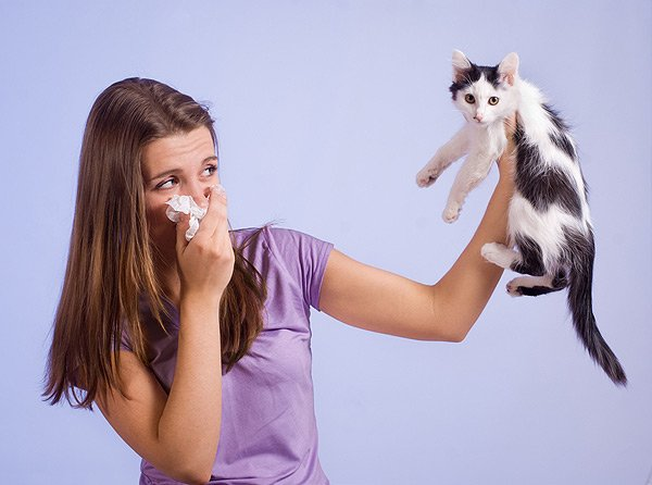 Research on Cat Allergies Gives Hope to New Treatment