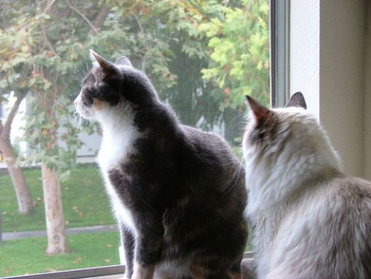 Five Tips on Keeping Your Cat Happy Indoors