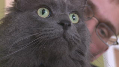 New Mexico Cat Reunited with Family 3 Years Later