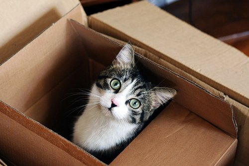 Six Tips for Moving Your Cat Across Country