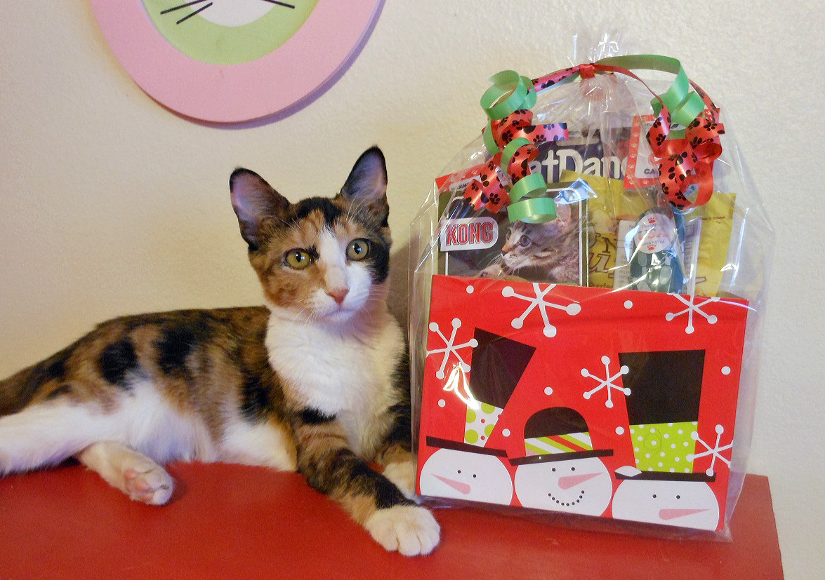 Quick Cat Tip of the Day:  Never Get Someone a Cat as a Surprise Gift