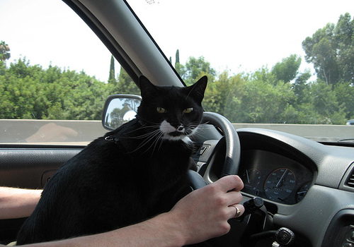 Five Car Traveling Tips for Your Kitten