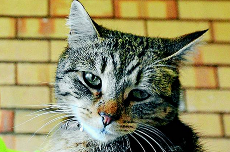 Shelly the Cat Saved a Life:  Now Help Save Hers