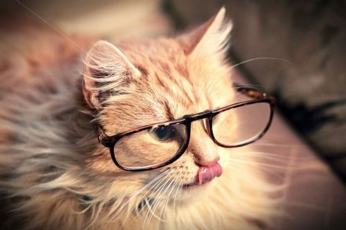 Tips on Keeping Your Cat's Brain Young