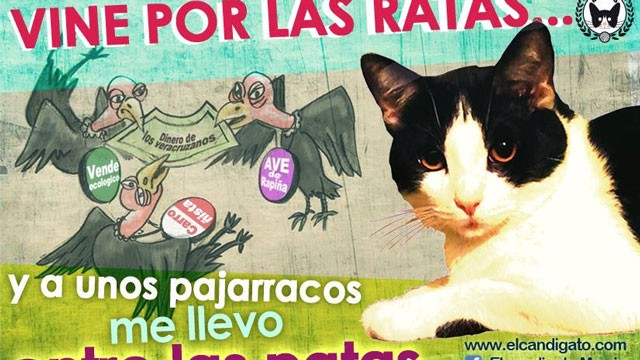 Morris the Cat Gets Thousands of Votes in Mexico Election