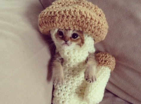 Baby Cat Wasabi Chan is Sweeping the Internet