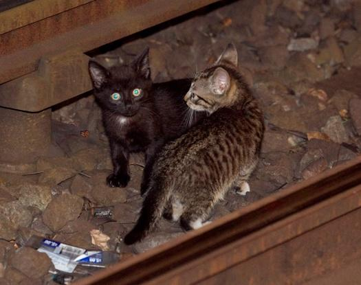 Subway Services Shut Down for 2 Hrs After Kittens Wander on Tracks