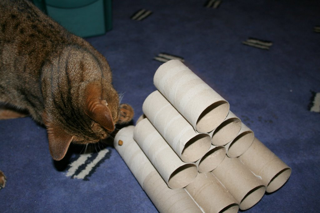 How to Save Money on Cat Toys