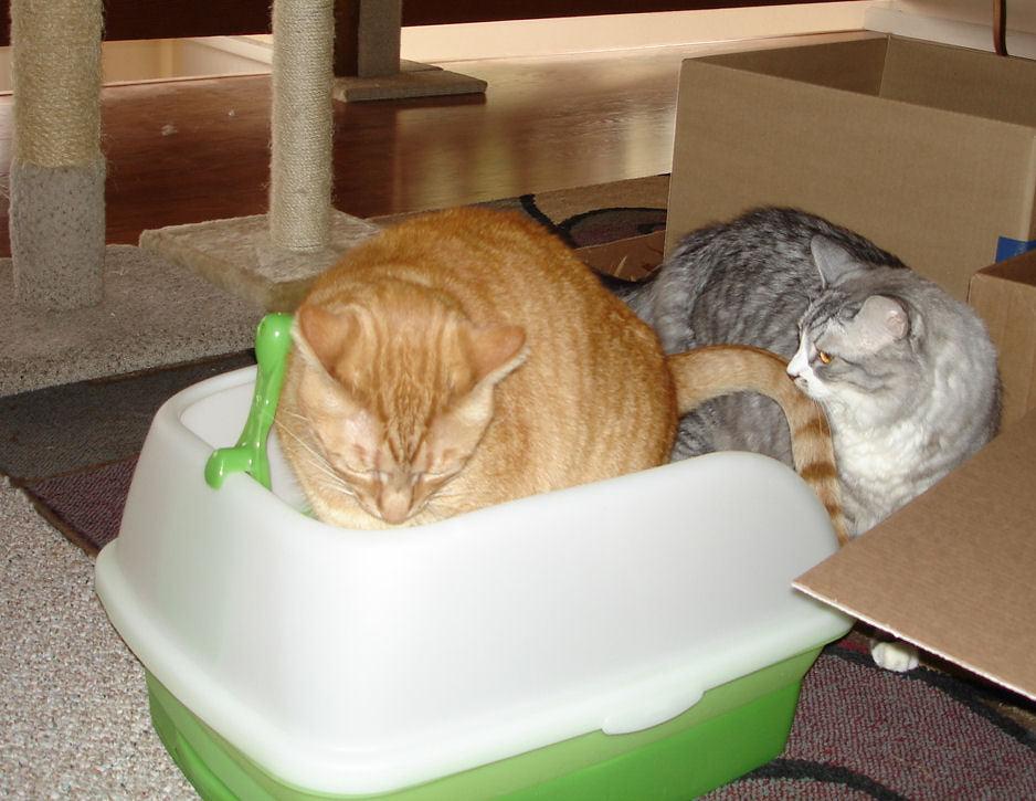 Tips for Choosing a Better Litter for Your Cat