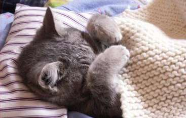 How to Prevent 5 Common Cat Illnesses