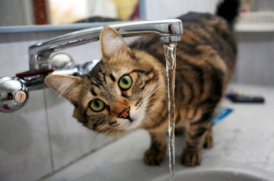 Five Water Behaviors with Your Cat and Helpful Tips