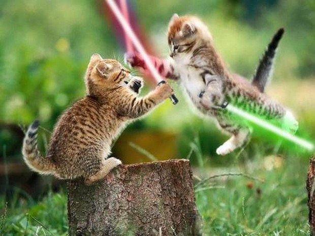 A Funny Gallery of Cats with Light Sabers