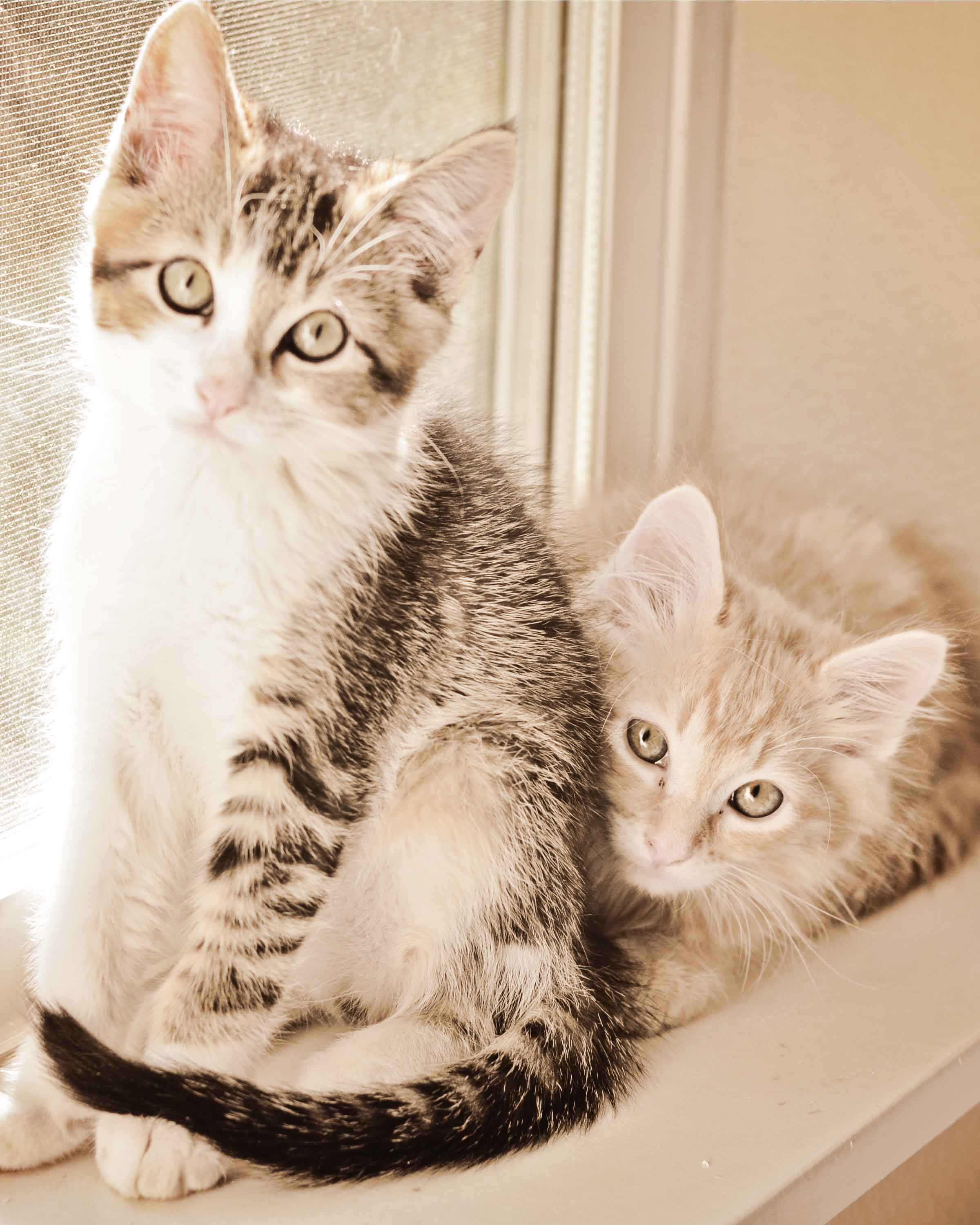 Shelter Kittens Move to Happy Home