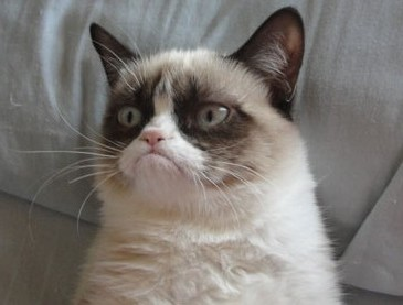 Grumpy Cat Has a Face for the Minnesota State Fair