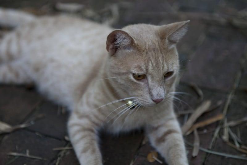 The 15 Strangest Cat Laws