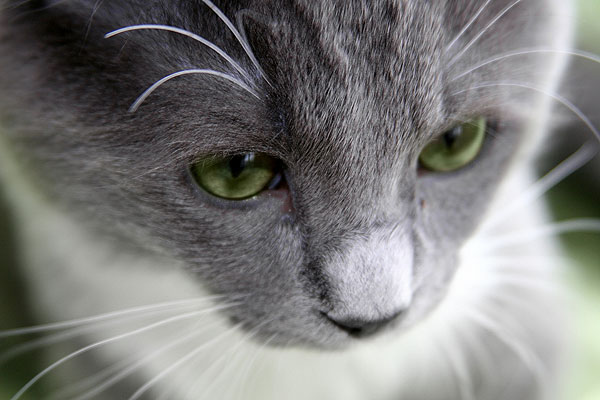 Coping with the Loss of a Cat